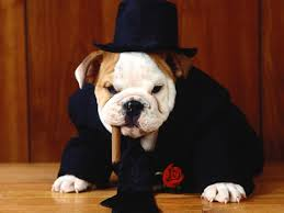 dapper dog