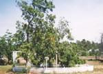SOAR Cemetery