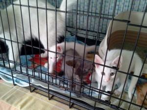 Angela&Kittens