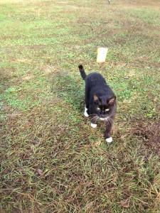 Yard Cats2