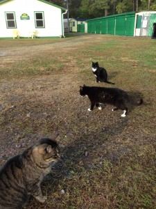 Yard Cats4