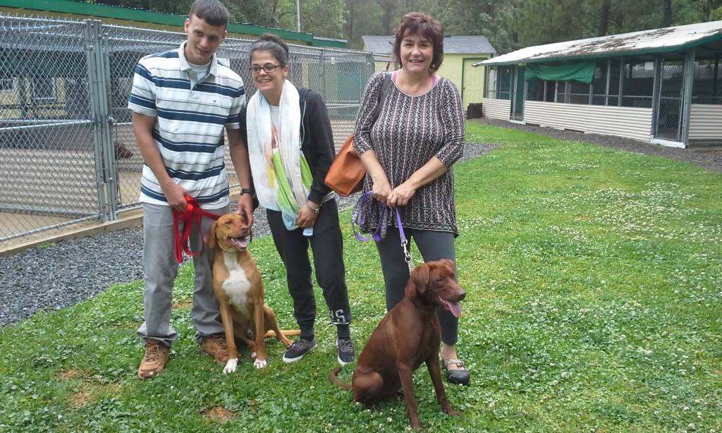 Brownie&Sydney Adoption4