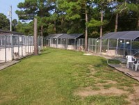 Dog Common Area